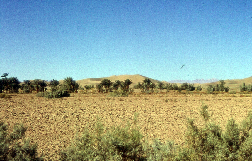 Palm trees plated on Saline Soil.png
